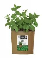 Branded Promotional Seed Gifts